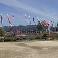 池田町アルプス広場 の 鯉のぼり