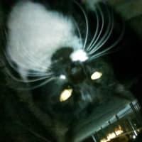 迷子猫? 白黒