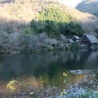# スズメよりちょっと大きい野鳥、アオジの姿、ドキドキ眺め # M池(岐阜県岐阜市)