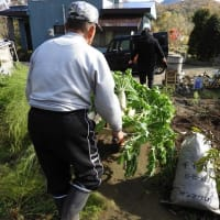 つれづれなるままに  3967  冬ごもり 保存野菜
