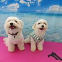 第2回《愛犬のお食事セミナー》開催します!【ALOHA塾】  犬のしつけ教室@アロハドギー