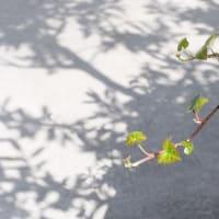 京都駅ビルで影を撮る (3)