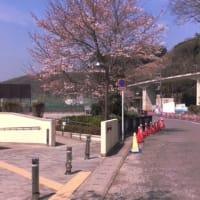 やっと桜が咲きはじめ、運動の季節が・・・?