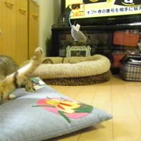 飛ぶネズミが現れても僕にお任せにゃ!