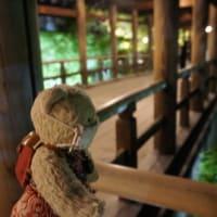 「東福寺」の夜間拝観とライトアップ。再開は、緊急事態宣言解除後に。その時は、ぜひ~