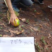 ハワイ2019:フルーツツアー(2)
