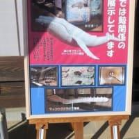 佐賀県・呼子 2019.11.17