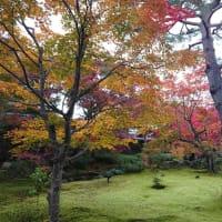 京の眼福⑤宝厳院