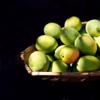 免疫力を高める秋の健康管理