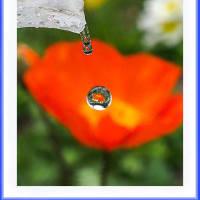 ひと滴の春