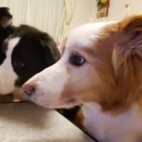 犬と人の休み明け2019'