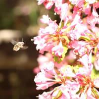 初夏のぐんま昆虫の森