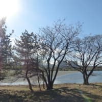 水害復旧開始?…多摩川冬景色シリーズ