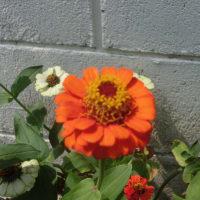 街角に咲く花📷街角ぶらり旅