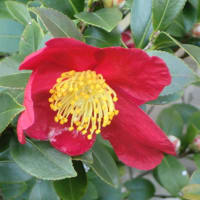 街角に咲く花📷街角ぶらり旅01-09