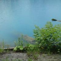 夏の1日ドライブ~青い池