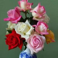 5月 バラの季節です! ε-(´∀`*)イイネッ ♪