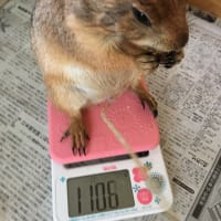 体重増加(^^)