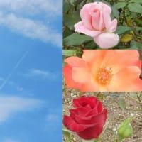 秋薔薇の空