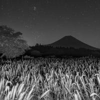 富士山とチカラシバのはずが。。。