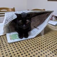 新聞読ませて!