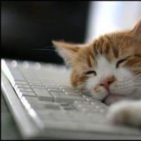 飼い主が手を「パー」にすると真似をする猫ちゃんが可愛すぎる!