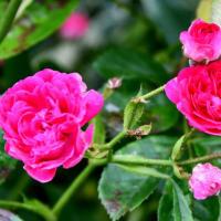 花シリーズ・春の別れ 香りも発散