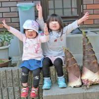 でっかいタケノコ(亀甲竹)だよ!