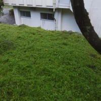 ゆず園草刈