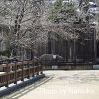 姫路でのホクト君♪(3月23日)