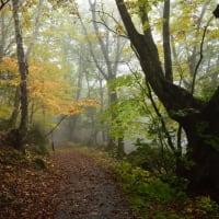 朝霧の志賀高原