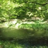 新緑の京都の写真で一句~第二十九段~