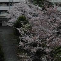 3月28日 ・五輪 本当に開催ですか ・東京新たに313人感染=新型コロナ
