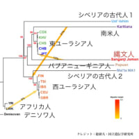 YAP遺伝子にみる日本人の特異性②