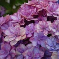 母の日の花々の巻