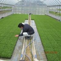 水稲採種農家の育苗巡回指導を実施しました