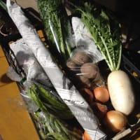 冬野菜が育ってきました。
