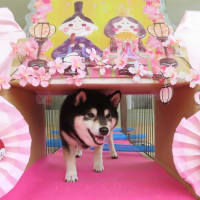 新入犬の【リュンヌちゃん】&【グリくん】 犬のしつけ教室@アロハドギー