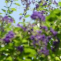 立秋・夏の庭