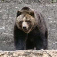 やっぱりクマが好き