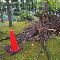 9/10~9/11、台風15号で樹木がやられた・・・。