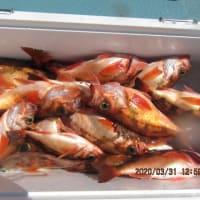 3月31日の釣果の写真