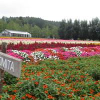 北海道 キャンピンカーの旅 3