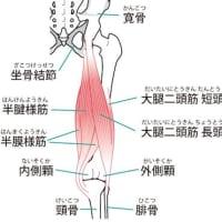 膝痛の原因と治療