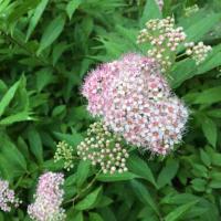 ウォーキング:色々な花に出会う