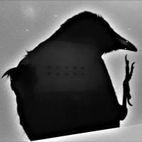 2021・4・9 東京国立近代美術館・コレクションによる小企画「幻視するレンズ」。ゼラチン・シルバー・プリントの幻惑。