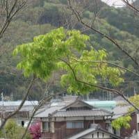 """""""新緑の季節"""""""