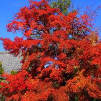 秋の京都 奥嵯峨を歩いてみませんか?清涼寺