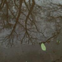 オサンポ walk - お天気weather: 朝は雨 raining in the morning