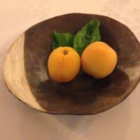 Apricot sorbet